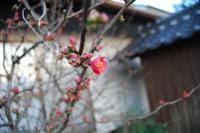 春の 『一期一会』 に乾杯!