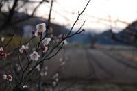 近づく春の足音