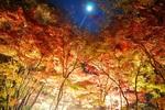 momiji_light.JPG
