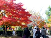 曽木の滝公園もみじ祭り