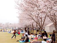 忠元公園桜まつり