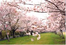 忠元公園(伊佐市大口原田)